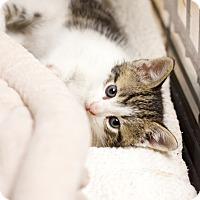 Adopt A Pet :: Harvest - Island Park, NY