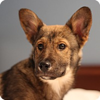 Adopt A Pet :: Fergus - Romeoville, IL