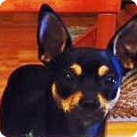 Adopt A Pet :: J J - Sacramento, CA