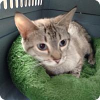 Adopt A Pet :: Caroline - Simpsonville, SC