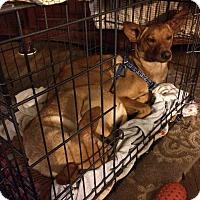 Adopt A Pet :: Simba & Nala (fostered in CA) - Cranston, RI