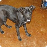 Adopt A Pet :: Cody - Groton, MA
