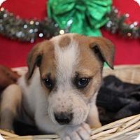 Adopt A Pet :: Allistar - Waldorf, MD