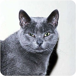 Photo 2 - Domestic Shorthair Cat for adoption in Whitewater, Wisconsin - Dancer
