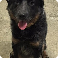 Adopt A Pet :: Roger - Texico, IL