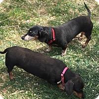 Adopt A Pet :: Romo - Lubbock, TX