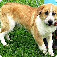 Adopt A Pet :: Killian - Oswego, IL