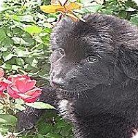 Adopt A Pet :: Gemma - Kyle, TX