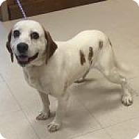 Adopt A Pet :: Prince - Dumfries, VA