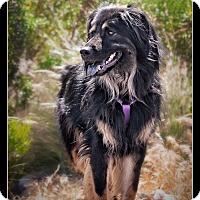 Adopt A Pet :: Chewy - Wickenburg, AZ