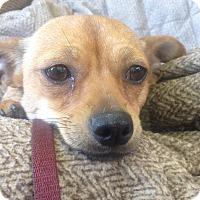 Adopt A Pet :: Clarissa - Memphis, TN