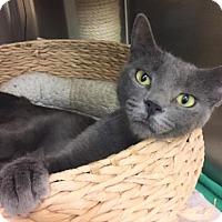 Adopt A Pet :: Tilly - Encinitas, CA