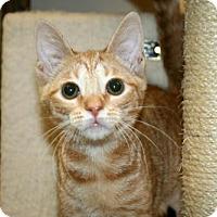 Adopt A Pet :: Lucini - Lancaster, PA