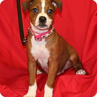 Adopt A Pet :: Ripley - Umatilla, FL