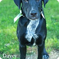Adopt A Pet :: Davey - Valparaiso, IN