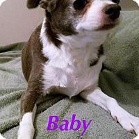 Adopt A Pet :: Baby - Durham, NC