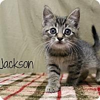 Adopt A Pet :: Jackson - Melbourne, KY
