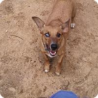 Adopt A Pet :: George - Providence, RI