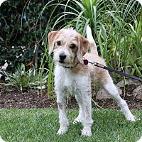 Adopt A Pet :: MARVEL - Newport Beach, CA