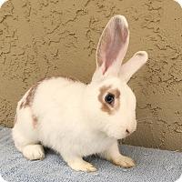 Adopt A Pet :: Evin - Bonita, CA