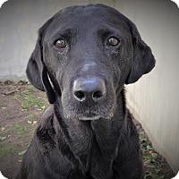 Adopt A Pet :: Bella - Fredericksburg, TX
