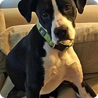 Adopt A Pet :: Nora Baker - Salt Lake City, UT