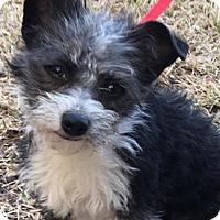 Adopt A Pet :: Berkley - North Richland Hills, TX