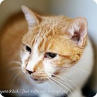 Adopt A Pet :: KC - Appleton, WI