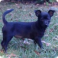 Adopt A Pet :: Merryweather - Gainesville, FL