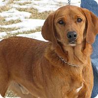 Adopt A Pet :: Red - Richmond, VA