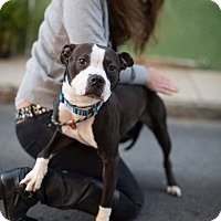 Adopt A Pet :: Magenta - Reisterstown, MD