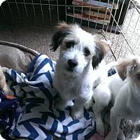 Adopt A Pet :: Maggie - Livermore, CA
