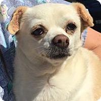 Adopt A Pet :: Peanut - Orlando, FL