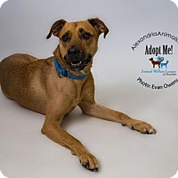 Adopt A Pet :: Guy - Alexandria, VA