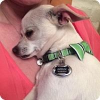 Adopt A Pet :: Patrick - Mesa, AZ
