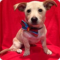 Adopt A Pet :: David - Irvine, CA
