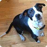 Adopt A Pet :: Marcie - Barnegat, NJ
