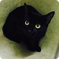 Adopt A Pet :: BEAUTY - San Antonio, TX