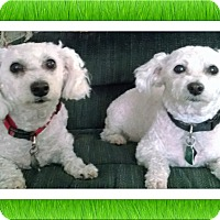 Adopt A Pet :: Daisy and Sophie - KS - Tulsa, OK