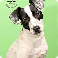 Adopt A Pet :: Simpson - Cincinnati, OH