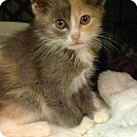 Adopt A Pet :: Lola - East Brunswick, NJ