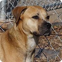 Adopt A Pet :: Prissy - Toccoa, GA