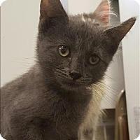 Adopt A Pet :: Moon - Neosho, MO
