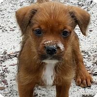 Adopt A Pet :: Edgar - Weeki Wachee, FL