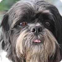 Adopt A Pet :: 'TAKI' - Agoura Hills, CA