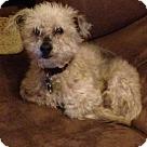 Adopt A Pet :: Bisquit