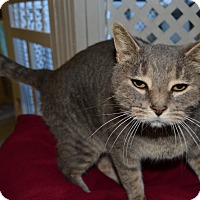 Adopt A Pet :: BigBoy - Michigan City, IN