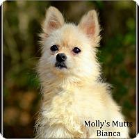 Adopt A Pet :: Bianca - Dixon, KY
