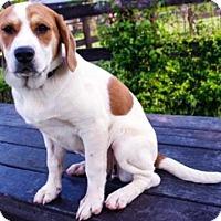 Adopt A Pet :: Renee - Fairfax, VA