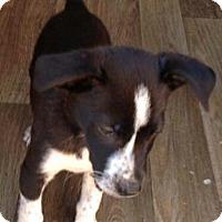 Adopt A Pet :: HAYDEN - Portsmouth, NH